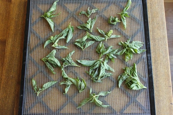How to Dehydrate Basil - Excalibur Dehydrator