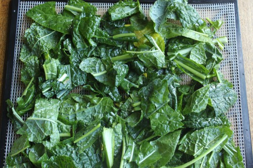Kale Chips Recipe - A crunchy, healthy snack!